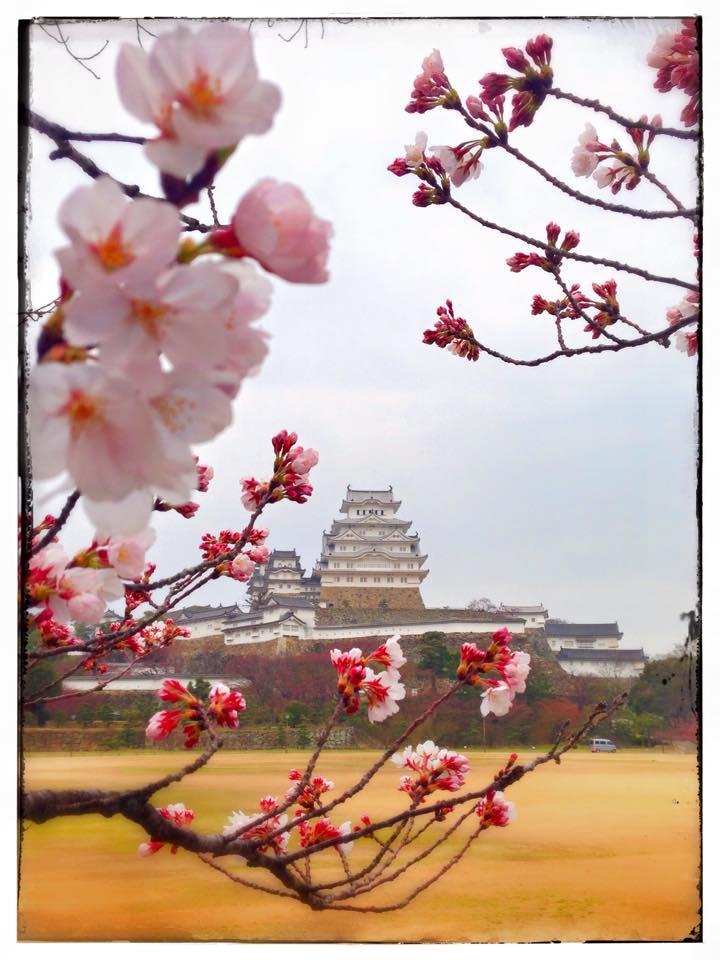 スマホで撮る姫路城!