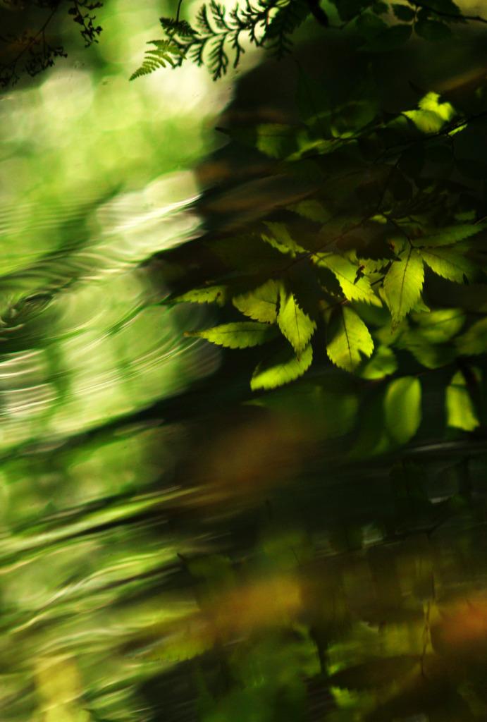 月締めの一枚…「葉紋」